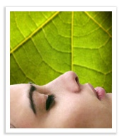 Relaxation-Script-Leaf-Photo